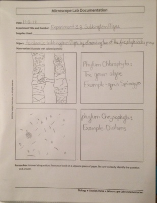 Biology Algae Notebooking Pages