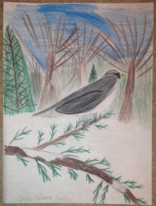 Nature Study Bird Notebooking Pages