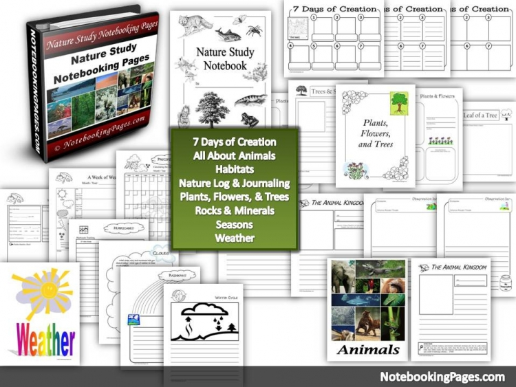 Nature Study Notebooking Pages - Nature Study for Beginners: 33 Easy Ideas to Help You Get Started