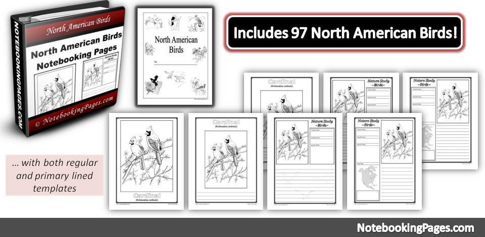 North American Birds Notebooking Pages