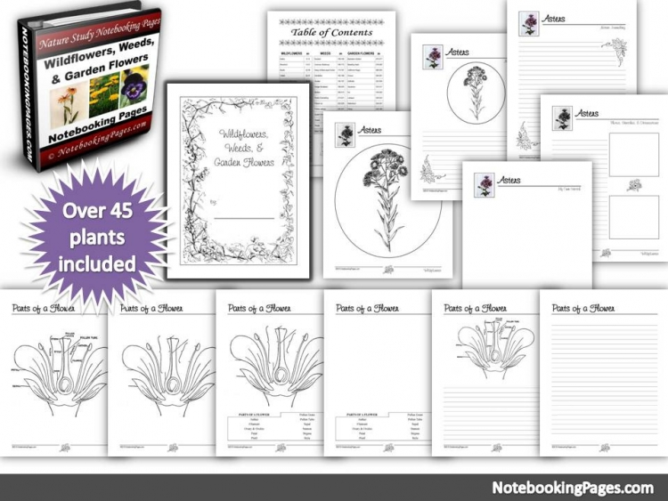Nature Study Wildflowers, Weeds, and Garden Flowers Notebooking Pages