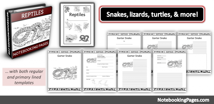 Reptiles Notebooking Pages