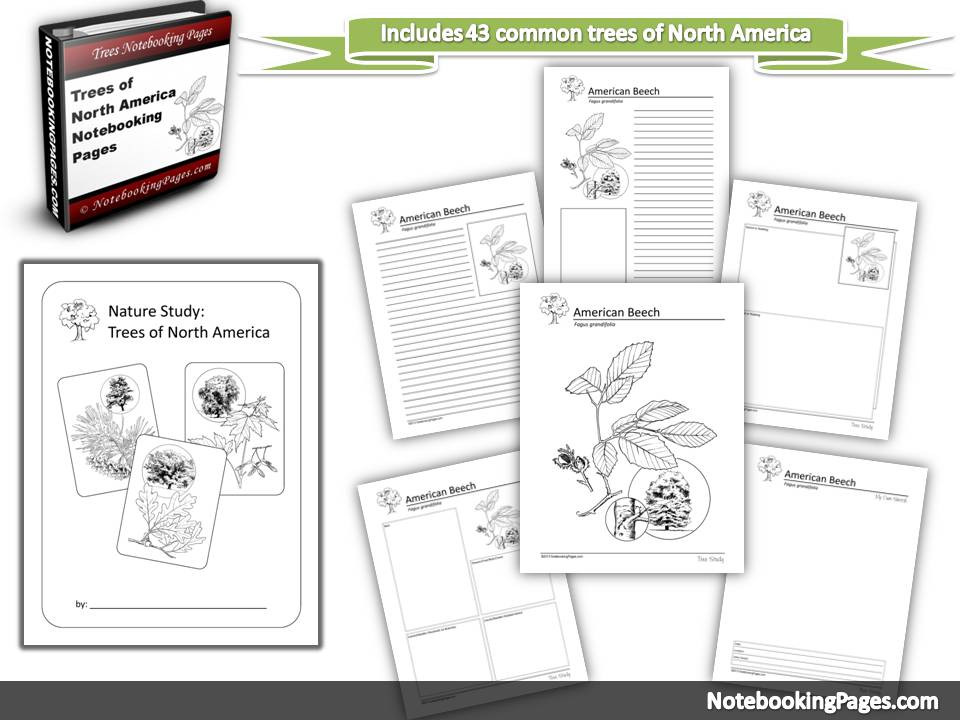 Nature Study Trees of North America Notebooking Pages