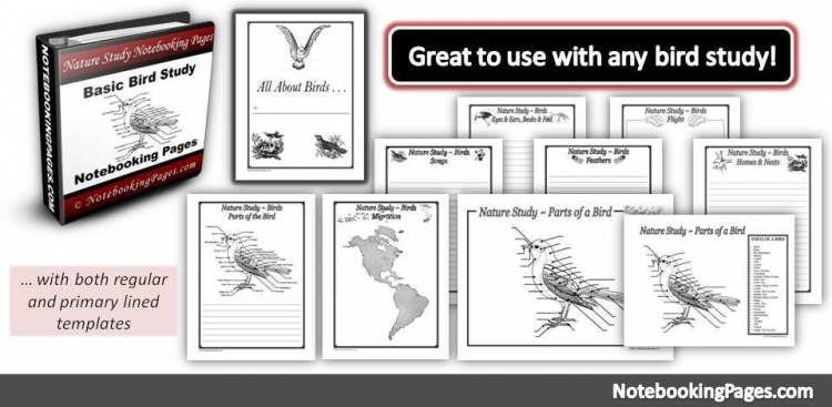 All About Birds Nature Study Notebooking Pages