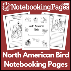 Birds of North America Notebooking Pages