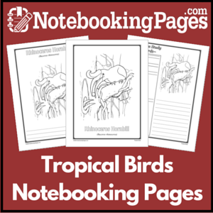 Tropical Birds Notebooking Pages
