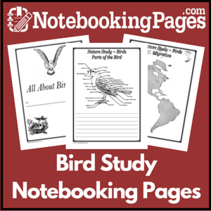Birds - Basic Study Pages