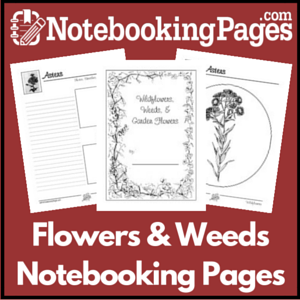 Wildflowers, Weeds, & Garden Flowers Notebooking Pages