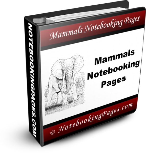 Nature Study Notebooking Pages - Mammals