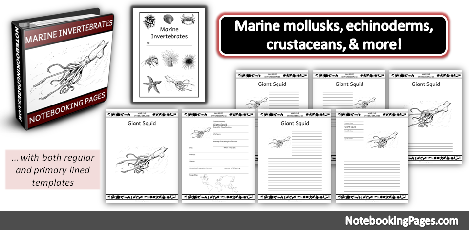 Marine Invertebrates Notebooking Pages