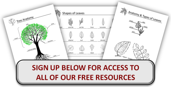 Free Tree & Plant Nature Study Notebooking Pages
