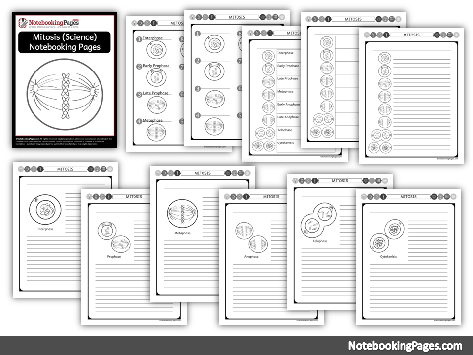 (Science) Mitosis Notebooking Pages