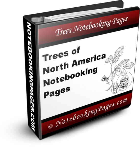 Nature Study Notebooking Pages - Trees of North America