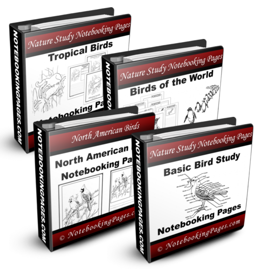 [BUNDLED] Nature Study: Birds Complete Set