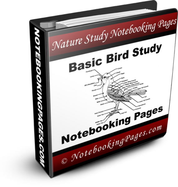 Nature Study Notebooking Pages - Basic Bird Study