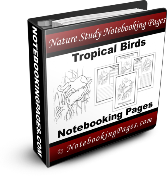 Nature Study Notebooking Pages - Tropical Birds