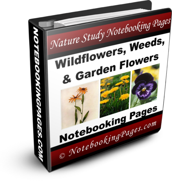 Nature Study Notebooking Pages - Wildflowers, Weeds, and Garden Flowers